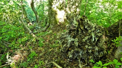 正体は根っこごと折れた木。多い