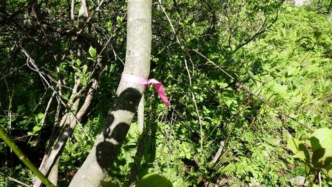 薮でわからなくなった時は赤目印を探す