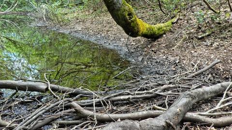 道に水がたまり沼になってる。枝を束ねて橋が作ってある