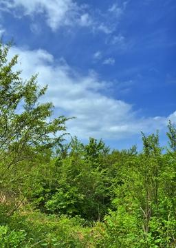 砕石所登山口周辺はなぜか低木地帯。空が高い