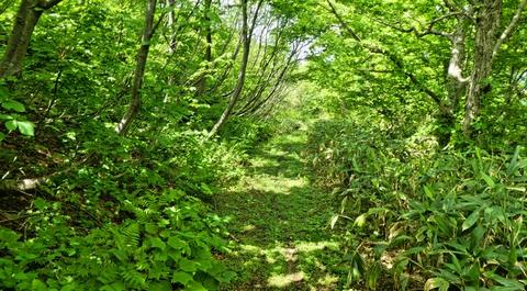 幅員のある緑の道を下っていく