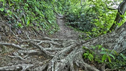巨大な木の根がせり出している