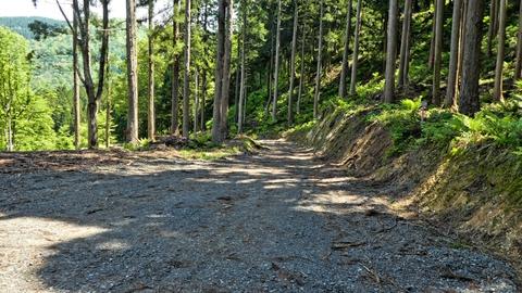 造林作業路に出る