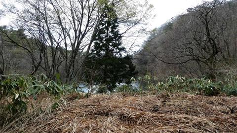 木の隙間から大池が見える