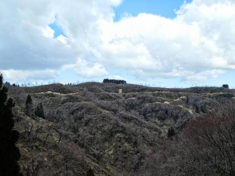 向かい側の山。造林路が蜘蛛の巣の様