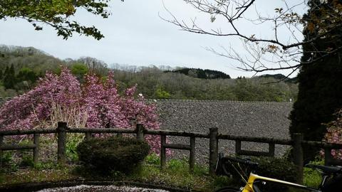 子撫川ダムが見えてきた。ロックフィルなので石造り