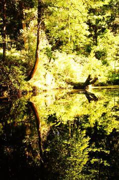 谷間の池は風も少なく液面が鏡のよう