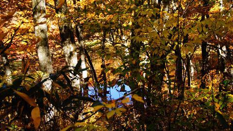 木々の隙間に水面が表れる