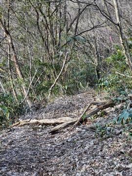 倒木をまたぎながら稜線を登っていく