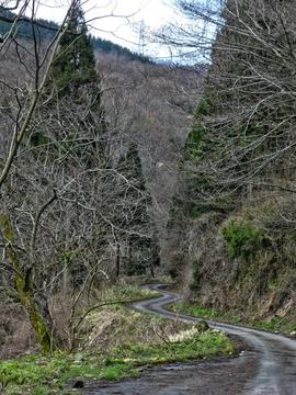 峠道を登る