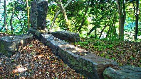 原生林には不思議な彫刻が並ぶ
