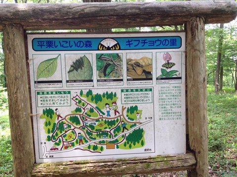 全体図とギフチョウの生態