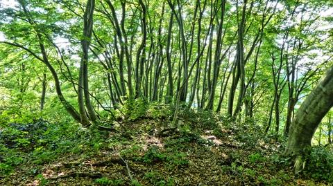 西谷山山頂。髪の毛のようなブナ林に圧巻。展望はなし