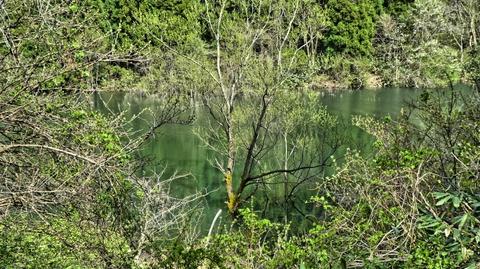 水から生えた木々。不思議な景色