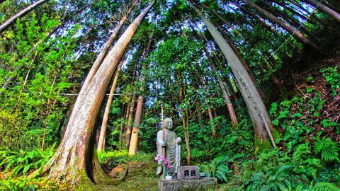 杉林と地蔵様