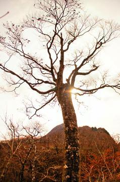 美しいブナの原生林