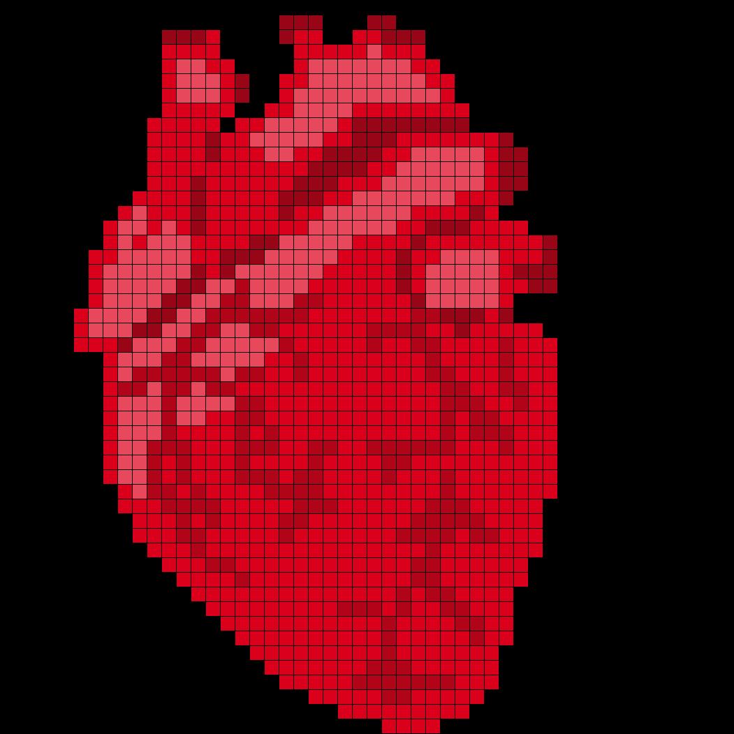 Anatomical Heart