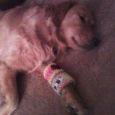 Dog Wearing My Kandi Bracer Cuff