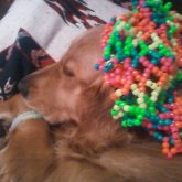 Dog Modeling Hat