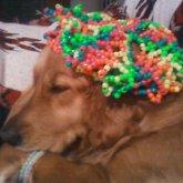 Dog Modeling Hat 2
