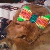 Dog Modeling Bow
