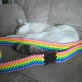 Rainbow Kandi Belt With Buckle