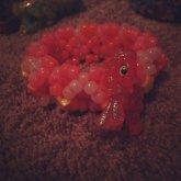 Crimson Gala Mini 3D Cuff