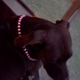 Peyote Dog Collar