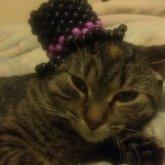 Kitty Kandi