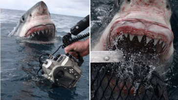 Shocking Moment A Huge Shark Attacked A Photographer Who Was Snapping It In The Water [Photos] 5