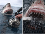 Shocking Moment A Huge Shark Attacked A Photographer Who Was Snapping It In The Water [Photos] 26