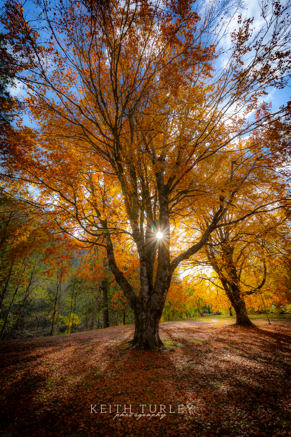 Tree Star by Keith Turley