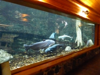 Tour of Cabela's Aquariums..  2017-01-18
