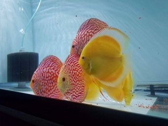 Red and Yellow3