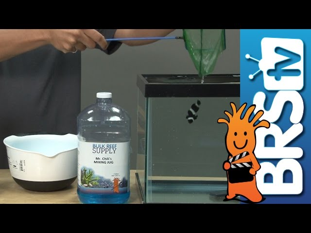 Week 15: Adding saltwater fish intelligently and safely | 52 Weeks of Reefing #BRS160