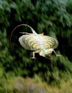 Avatar lizard