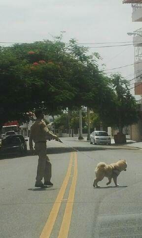 ¡Ah! y perros... no olvidemos que también sirven para pasear perros.