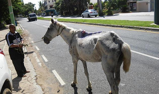 ¿Nos ayudas a salvar a 100 caballos?