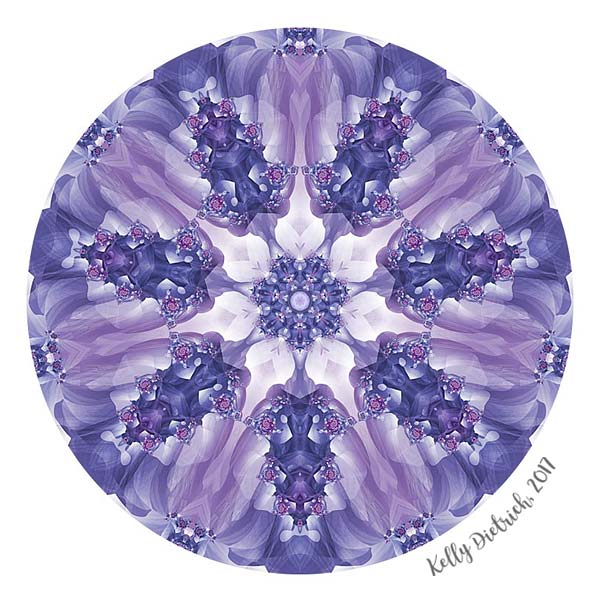 Violet and Magenta Mandala