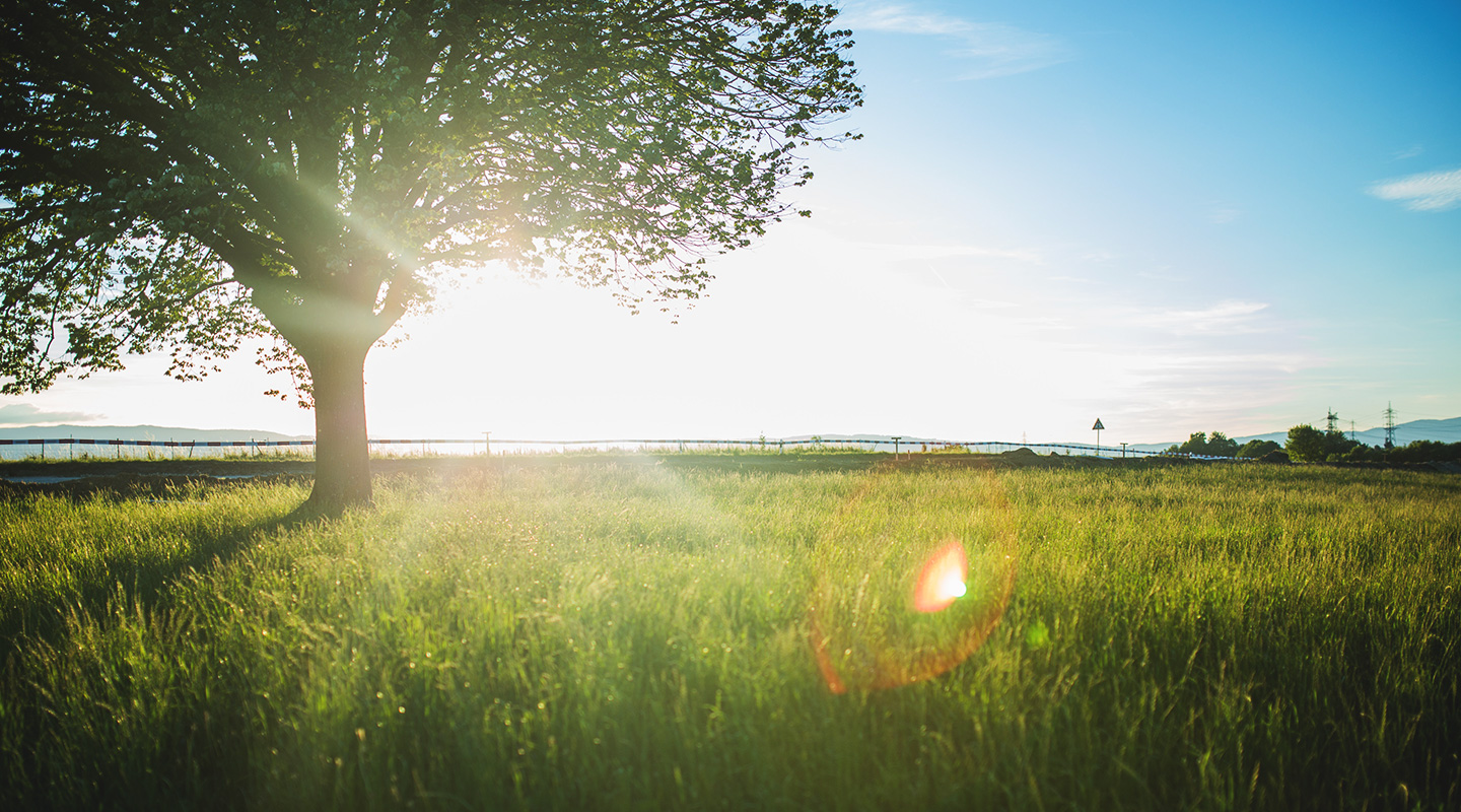 Between Two Trees: Our Transformation from Death to Life, by Shane J. Wood