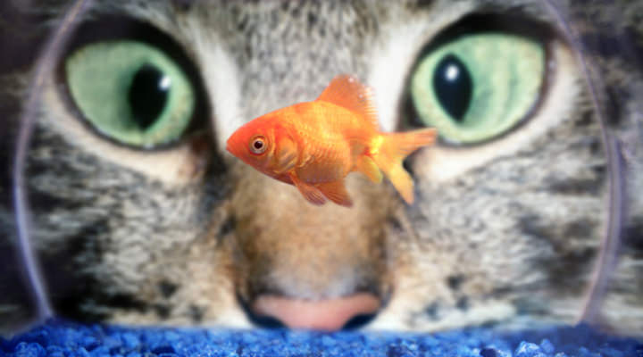 How to Breathe Underwater & Other Lessons from the Fishbowl