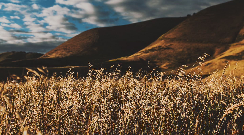 Steve's Devotional – Hills To Die On
