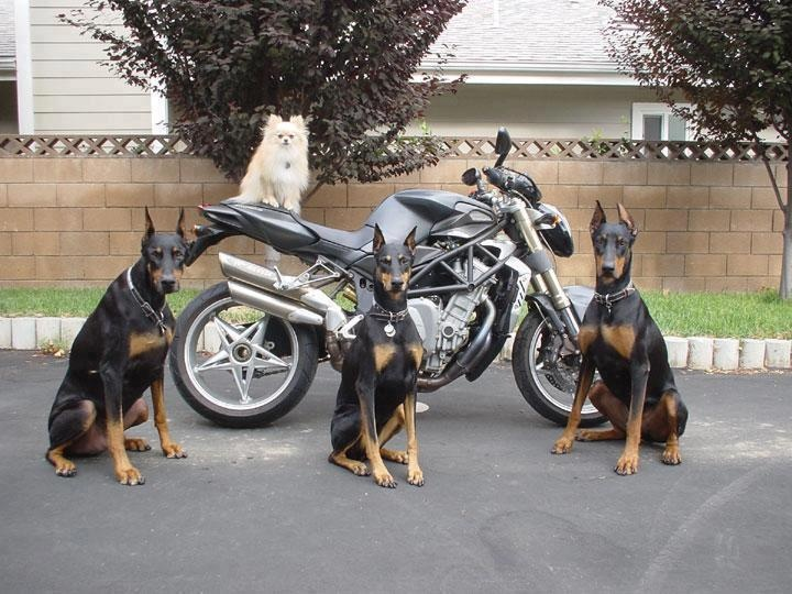 That's one way to prevent motorcycle theft.