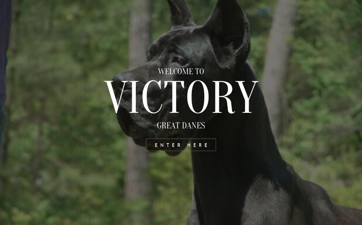 Victory Great Danes