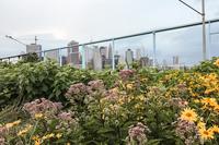 LivingtonSt NYC