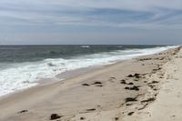 DouglasRoad Beach02