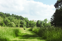 LoomisRoad Lawn