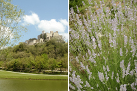 PiantoniVilla Lavender