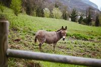 RouteduSapenay Donkey