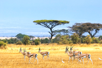 The South Africa Safari
